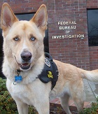 Aldo the Florida drug sniffing dog whose reliability to find drugs is questioned by the Supreme Court